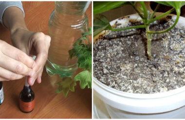 Прості методи, які допоможуть позбутися цвілі у горщику з квітами