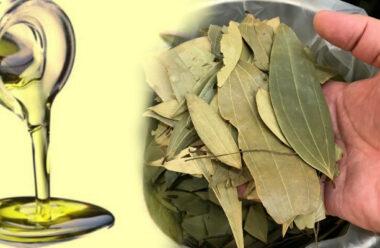 Лавровий лист — корисні властивості, про які мало хто знає. Рецепт приготування.