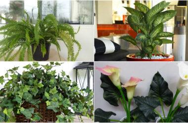 Квіти які приносять нещастя в ваш дім. Не тримайте їх вдома.