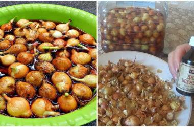 Як правильно підготувати насіння цибулі перед посадкою, щоб вона росла та не хворіла.