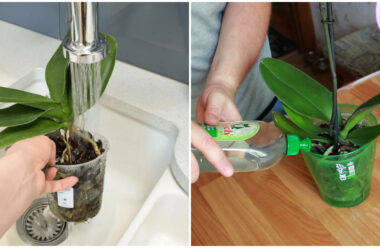 Що робити, якщо орхідея довго не цвіте. Поради для господині.