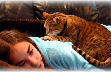 Чому кішка завжди лягає на хворе місце людини, та на що слід звернути увагу