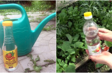 Застосування оцту на городі. Натуральний засіб від бур'янів і шкідників
